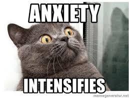 Anxiety Cat Memes - anxiety intensifies wtf cat meme generator