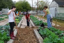 Houston Urban Gardeners - urban harvest volunteer in a community garden