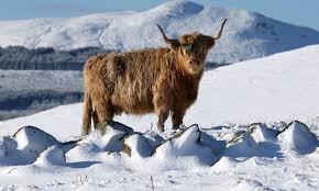 Snow Scotland Warnings Remain As Fresh Snow Sweeps Across Scotland Sunday Post