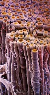 a cross section of a bundle of nerve fibers axons orange are