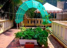 terrace gardening smart garden single complete 24 sq ft self watering organic