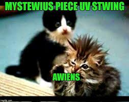 Cute Kitten Memes - cute kittens the cat is always in control