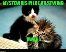 Omg Cat Meme - cute kittens the cat is always in control