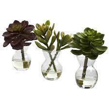 succulent arrangements nearly 4954 s3 succulent arrangements green