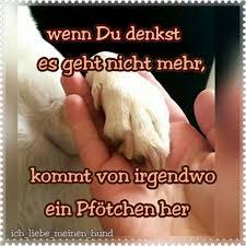 schöne hundesprüche images tagged with hundesprüche on instagram