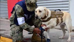 Dogs Helping Blind People Meet Frida The Rescue Dog Who Is Helping People In The Mexico