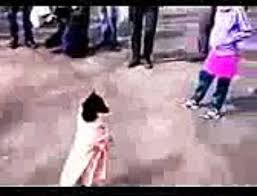 boxer dog vine funny dog vines 2015 part 9 super dogs vs stupid dogs all them so