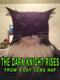 Random Cat Meme - funny pictures 15 random strange weirdness team jimmy joe