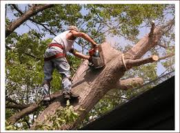 new jersey tree removal nj tree services emergencey tree removal nj