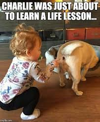 Life Lesson Memes - life lessons imgflip