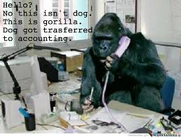 This Is Dog Meme - hello no this isn t dog this is gorilla by serkan meme center