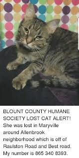 Lost Cat Meme - blount county humane society lost cat alert she was lost in