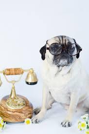 Pug Home Decor 441 Best Pug Love Images On Pinterest Pug Love Pug Dogs And Pug