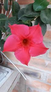 Identify Flowers - need help to identify this houseplant with red flowers snaplant com