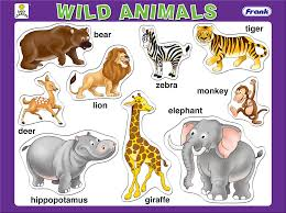 animal pictures for kids captions to color funny hd print domestic