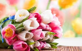 Images Flowers Pink Flowers Wallpaper For Desktop Free Download For Beautiful Desktop