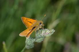 free images nature meadow prairie leaf flower wildlife