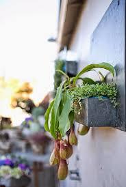 Accent Decor Inc 20 Best Terrariums Images On Pinterest Terrariums Succulent