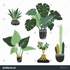 Modern Houseplants by Hand Drawn Tropical House Plants Scandinavian Stock Vector