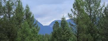 inland empire tree association rocky mountain tree company