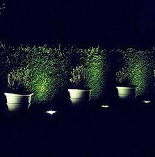 lighting plants and shrub borders