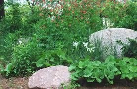 native prairie plants native plant gardens chicago tonight wttw