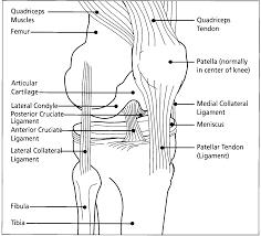 Anterior Fibular Ligament Exercise Daily