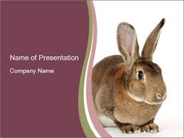 fluffy rabbit powerpoint template u0026 backgrounds id 0000023710