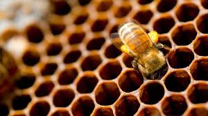 beehives symmetry magazine