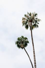 things to do in los my 10 favorite things to do in la palms trees and palm trees