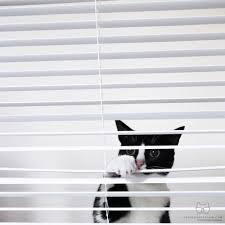 Small Mini Blinds 258 Best Cats U0027n Mini Blinds Images On Pinterest Mini Blinds