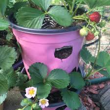 Diy Strawberry Planter by Diy U0026 Upcycled Projects Refresh Living