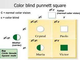 Colour Blind Percentage Modern Genetics Ppt Online Download