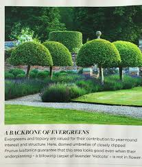 English Box Topiary - 645 best buxus topiary hedges bukszpan topiary żywopłoty