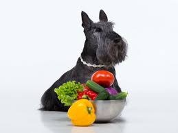 are onions for dogs can dogs eat onions american kennel club