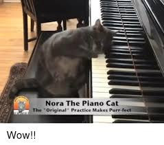 nora the piano cat the original practice makes purr fect wow