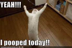 I Pooped Today Meme - yeah i pooped today cheezburger funny memes funny pictures