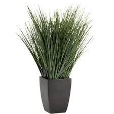 green plants polyvore