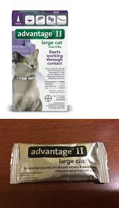 232 best flea and tick remedies 20738 images on pinterest