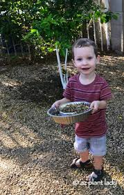 gardening with kids a love affair with rocks ramblings from a