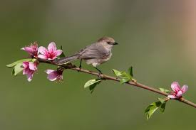 birds on flower branches hd bird on a flowering tree branch