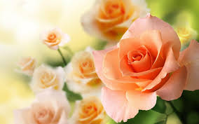 roses colors roses live wallpaper backgrounds android apps on play