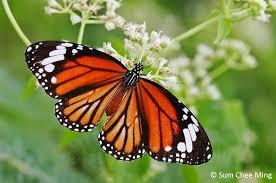 butterflycircle checklist