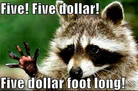 animal jokes raccoon funny animal humor photo 20225762