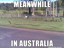 Australia Meme - meanwhile in australia meme funny memes