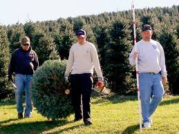 alleghany christmas tree association sparta north carolina