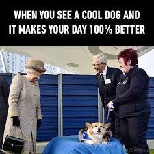 Cool Dog Meme - 100 funny memes funny birthday meme funny animal memes