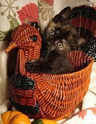 thanksgiving cats from mscott5903