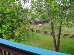backyard farming june 2011