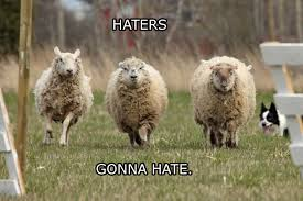 Alpaca Sheep Meme - haters gonna hate sheep edition haters gonna hate know your meme